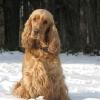 Leden 2010 Arwenka na sněhu